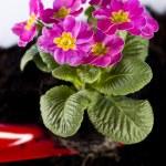 Garden concept, plant — Stock Photo #7452772