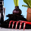 Plant and garden tool — Stock Photo #7455164