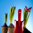 Plant and garden tool — Stock Photo #7455250
