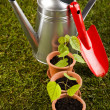 Set of garden tools — Stock Photo #7455685