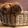 Puppies, wicker basket — Stock Photo #7766463