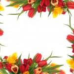 Tulip Flower Border — Stock Photo #7951839
