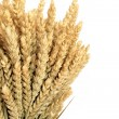 Wheat Bundle — Stock Photo
