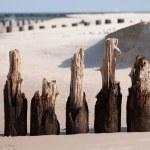 Wooden breakwaters — Stock Photo