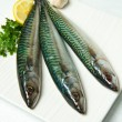 Stock Photo: Mackerel