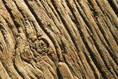Trä textur — Stockfoto