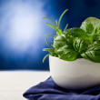 Herbs highlighted by spot light - Foto de Stock