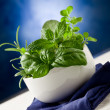 Herbs highlighted by spot light - Stock Photo