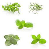 Herbs Collage on white background — Stock Photo
