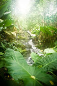 Tropical jungle — Stock Photo