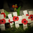 Stock Photo: Poppies by flashlight