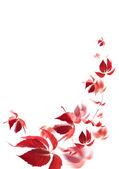 фон из красные осенние листья — Стоковое фото