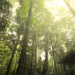 Rainforest with sun rays and flare — Stock Photo