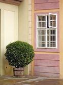 дерево в горшке, открытый у окна — Стоковое фото