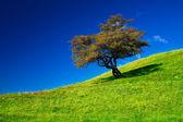 Single tree on a grassfield — Stock Photo