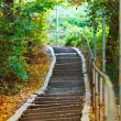 Stairs in forest - Stock Photo