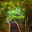 Stairs in forest — Stock Photo