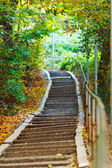 Stairs in forest — Foto Stock
