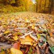 Colorful autumnal landscape — Stock Photo