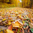 Stock Photo: Colorful autumnal landscape