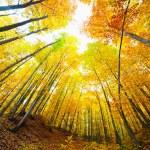 Colorful autumnal landscape — Stock Photo #7510899