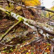 Landscape with fallen trees in the autumn - Stock Photo