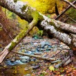 Landscape with fallen trees in the autumn — Stock Photo