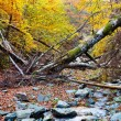 Landscape with fallen trees in the autumn — Stock Photo #7510930