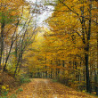 Colorful autumnal landscape — Stockfoto