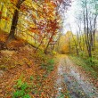 Colorful autumnal landscape — Foto de Stock