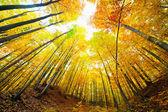 Kleurrijke herfst landschap — Stockfoto