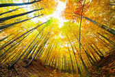 Colorful autumnal landscape — Stock Photo
