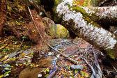 Paisagem com árvores caídas no outono — Foto Stock