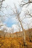 Plantation of young walnuts — Stock Photo