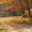 Autumnal landscape in the forest — Stock Photo