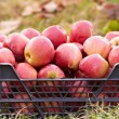 Red apples in a crate — Stock Photo