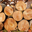 Logs — Stock Photo #7721260