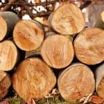 Logs — Stock Photo
