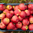 Stock Photo: Red apples in a crate
