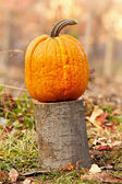 Pumpkin outdoor — Stock Photo