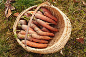 Carrots in a basket outdoor — Stock Photo