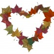 Autumn leaves isolated empty heart — Stock Photo