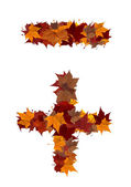 Plus and minus symbol multicolored fall leaf composition isolate — Stock Photo
