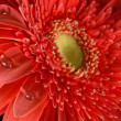 Red flower spring time background - Photo