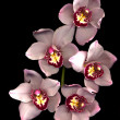 stock-photo-pink-orchid