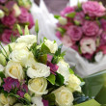 Flowers — Stock Photo #7751719