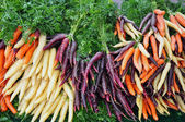 Colorful winter carrots — Stock Photo