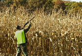 Cornfield hunter — Stockfoto