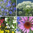 Collection of spring flowers and plants — Stock Photo