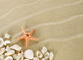 Starfish and shells on a beach — Stock Photo